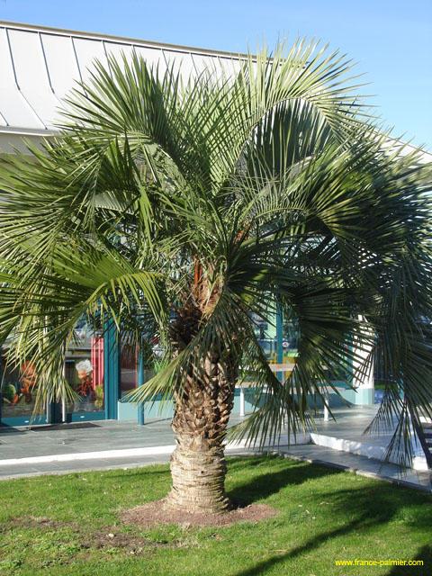 palme im garten palme im garten pflanzen imgp1851025waggy120070625 palme im garten pflanzen. Black Bedroom Furniture Sets. Home Design Ideas
