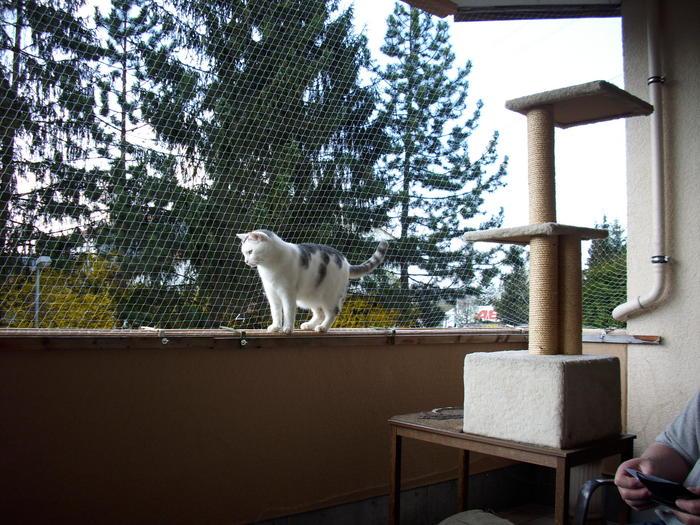 Katzen Auf Balkon Ohne Netz Katzen Forum