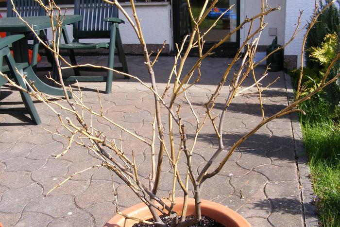 ht dieser zitronenbaum noch eine chance pflanzenkrankheiten sch dlinge green24 hilfe. Black Bedroom Furniture Sets. Home Design Ideas
