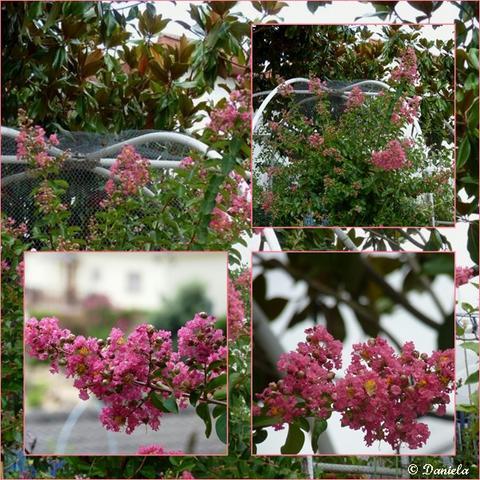 baum pinke blüten