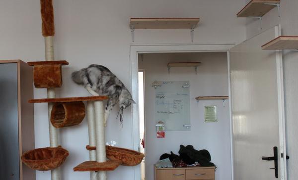 Kleine wohnung katzengerecht gestalten katzen forum for Wohnung gestalten